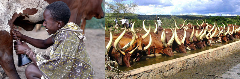 cultural encounter in lake mburo