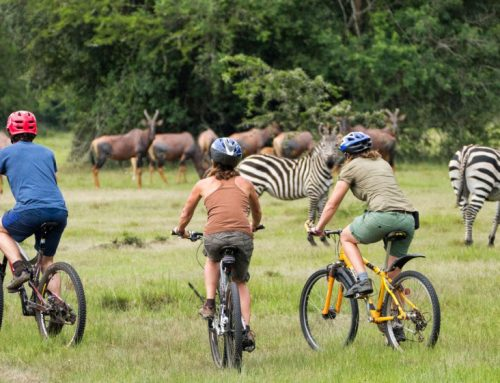 1 Day Lake Mburo Wildlife Safari Uganda Tour with Nature Hike / 1 Day Uganda Wildlife Safari In Lake Mburo Park- Uganda Safari News