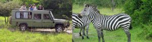5 Days Uganda safari tour