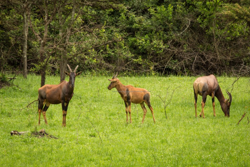 Nature walks in Lake Mburo National Park Uganda