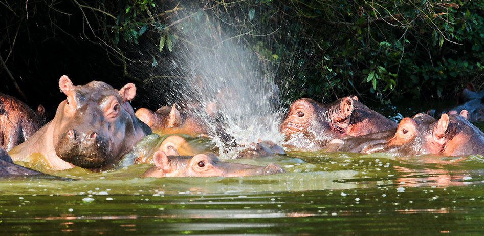 Wildlife in Lake Mburo National Park Uganda: